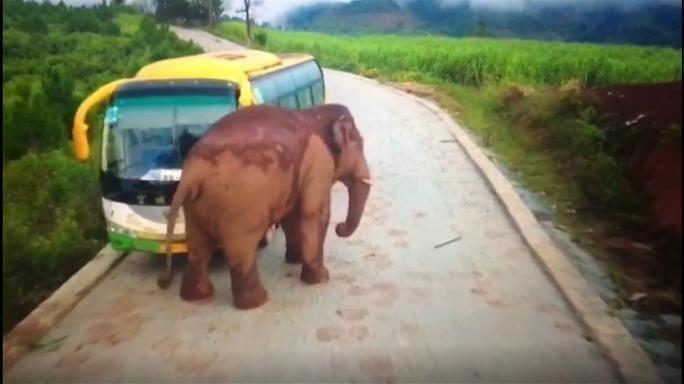 Слон атаковал автобус спассажирами вюжной «Поднебесной»